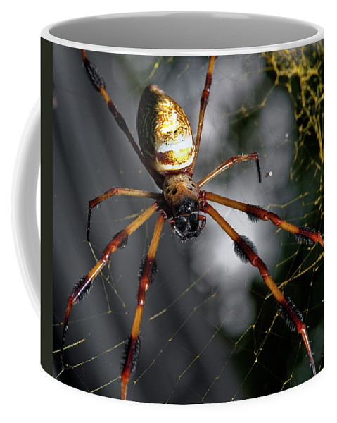 Spider Coffee Mug featuring the photograph Out Of The Dark by Christopher Holmes