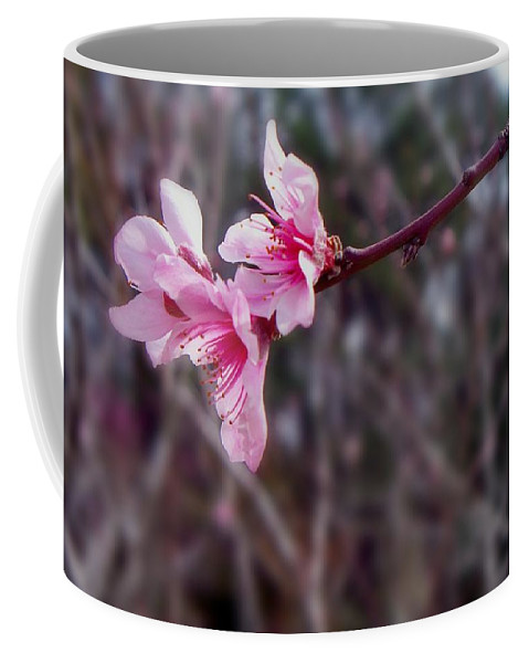 Peach Coffee Mug featuring the photograph Out On A Limb by Betty Northcutt