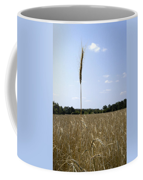 Oat Coffee Mug featuring the photograph Outstanding In Its Field. by Robert Ponzoni