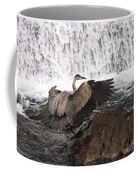 Blue Coffee Mug featuring the photograph Over The Rocks We Go by Deborah Benoit