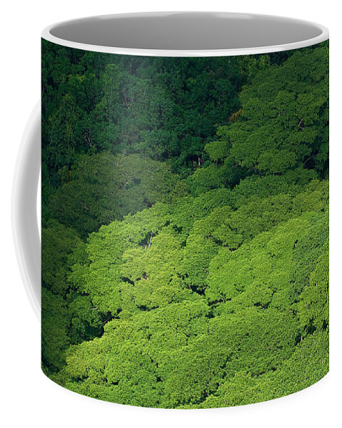Birds Eye View Coffee Mug featuring the photograph Over The Treetops by Max Steinwald