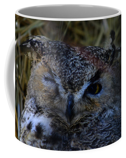 Owl Coffee Mug featuring the photograph Owl by Anthony Jones