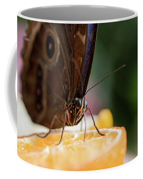 Butterfly Coffee Mug featuring the photograph Owl Butterfly Feeding On An Orange by Ben Delves