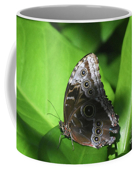 Blue-morpho Coffee Mug featuring the photograph Owl Butterfly On A Cluster Of Green Leaves by DejaVu Designs
