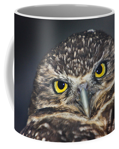 Owl Coffee Mug featuring the photograph Owl Face To Face by Douglas Barnett