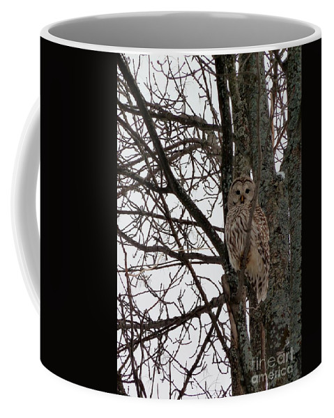Owl Coffee Mug featuring the photograph Owl In Winter by Claire Bull