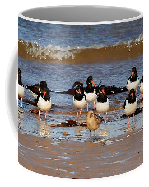 Birds Coffee Mug featuring the photograph Oystercatchers by Jeff Townsend