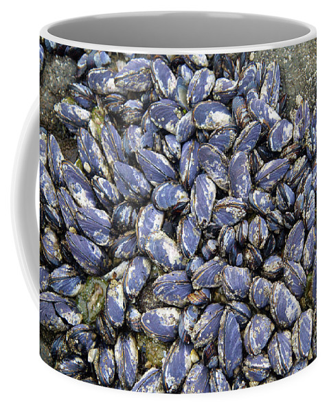 California Mussel Coffee Mug featuring the photograph Pacific Blue Mussels by Bruce Block