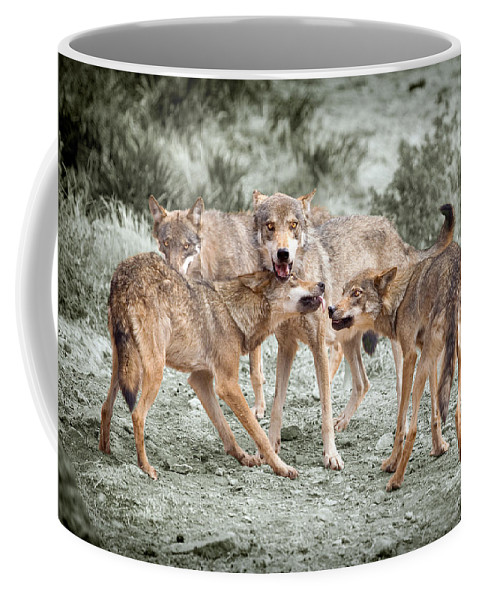 Wolf Coffee Mug featuring the photograph Pack Dispute by Mal Bray