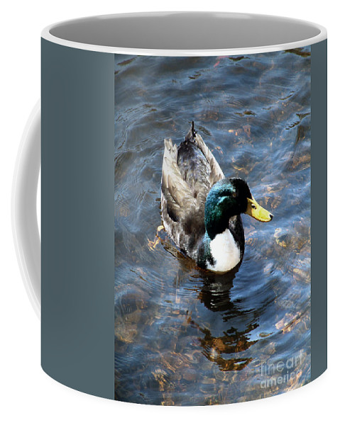 Drake Coffee Mug featuring the photograph Paddling Peacefully by RC DeWinter