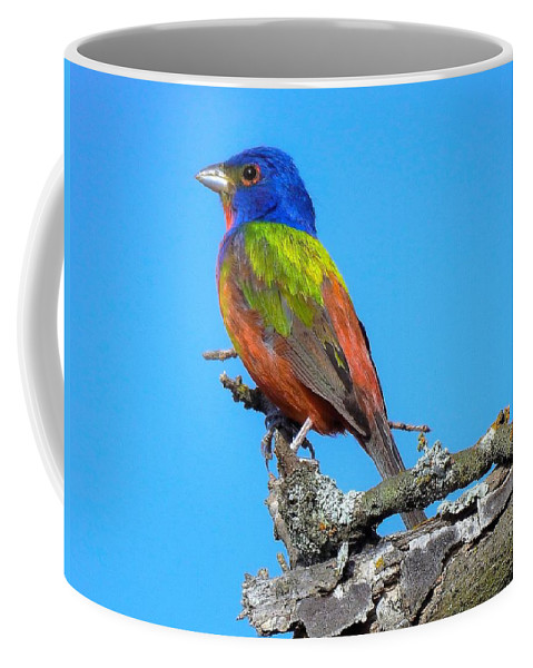 Painted Bunting Coffee Mug featuring the photograph Painted Bunting by Dennis Nelson