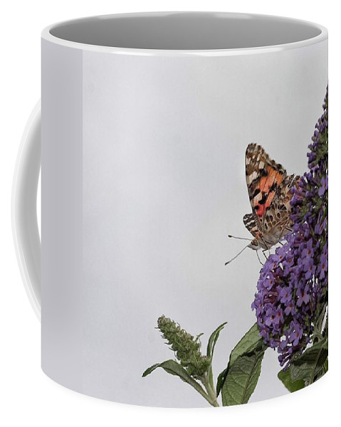 Insectsofinstagram Coffee Mug featuring the photograph Painted Lady (vanessa Cardui) by John Edwards