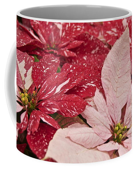 Poinsettia Coffee Mug featuring the photograph Painted Poinsettias by Michael Peychich