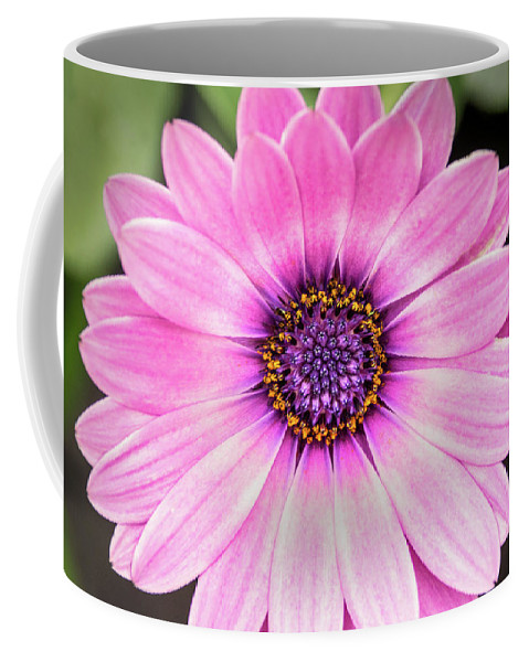Flower Coffee Mug featuring the photograph Pale Purple Flower by Don Johnson