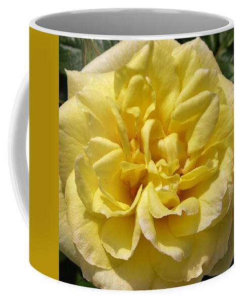 Rose Coffee Mug featuring the photograph Pale Yellow Rose by Richard Brookes