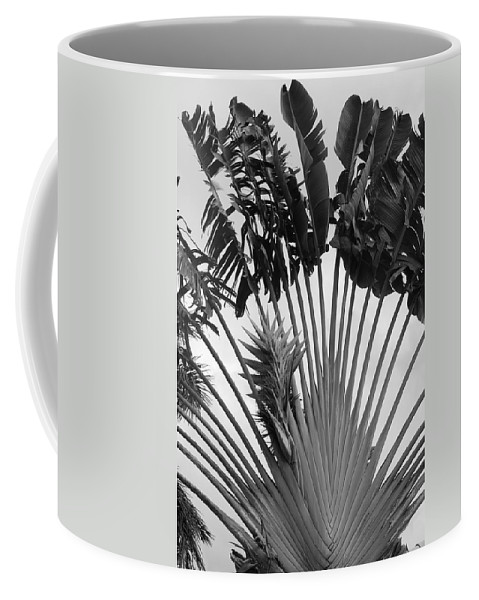 Macro Coffee Mug featuring the photograph Palm Frons by Rob Hans