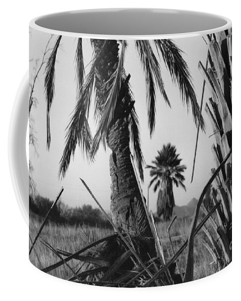 Black And White Photograpy Coffee Mug featuring the photograph Palm In View Bw Horizontal by Heather Kirk