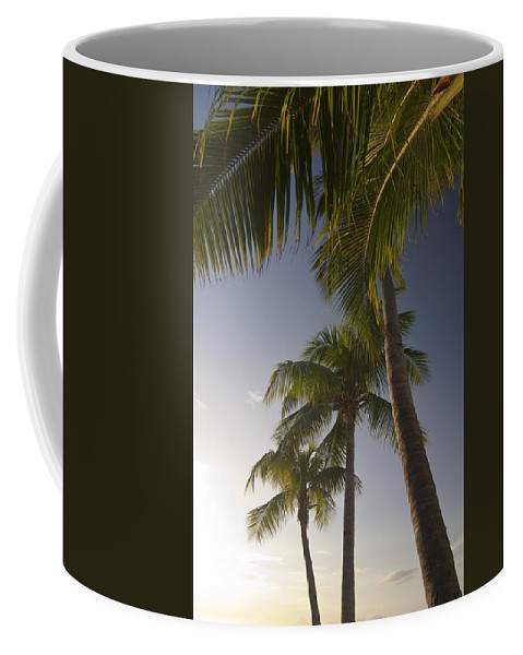 Palm Trees Coffee Mug featuring the photograph Palm Trees At Sunset by Sven Brogren