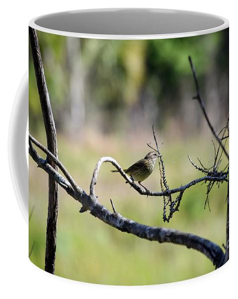 Palm Warbler Greetings Coffee Mug featuring the photograph Palm Warbler Greetings by William Tasker