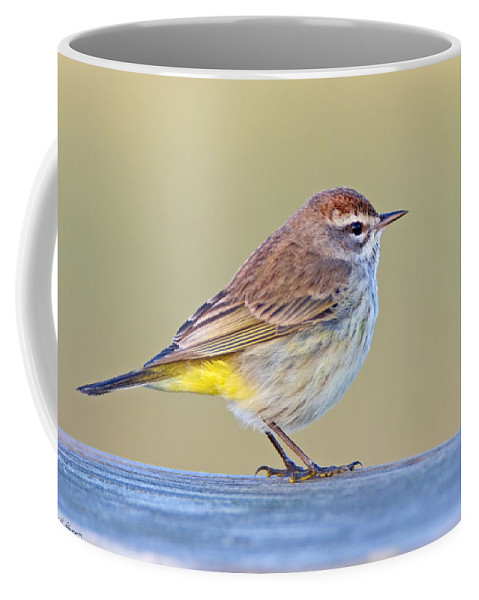 Palm Warbler Coffee Mug featuring the photograph Palm Warbler by John Harmon