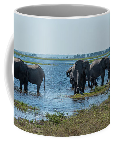 Africa Coffee Mug featuring the photograph Panorama Of Elephant Herd Drinking From River by Ndp