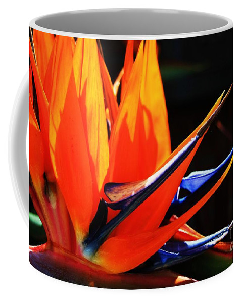 Bird Of Paradise Coffee Mug featuring the photograph Paradise 1 by Patrick Dablow