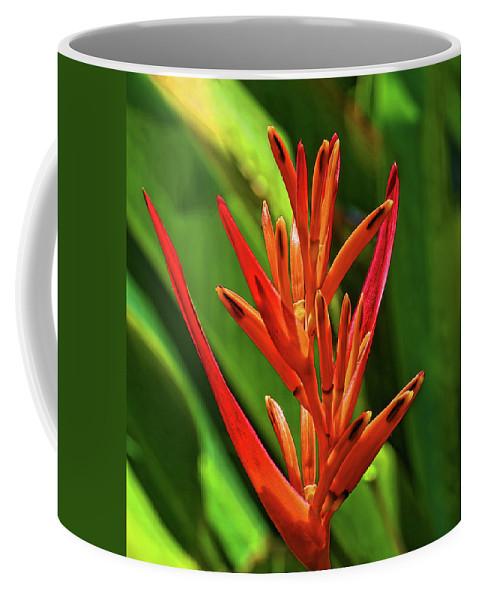 Parakeet Flower Coffee Mug featuring the photograph Parakeet Flower Exotic by HH Photography of Florida