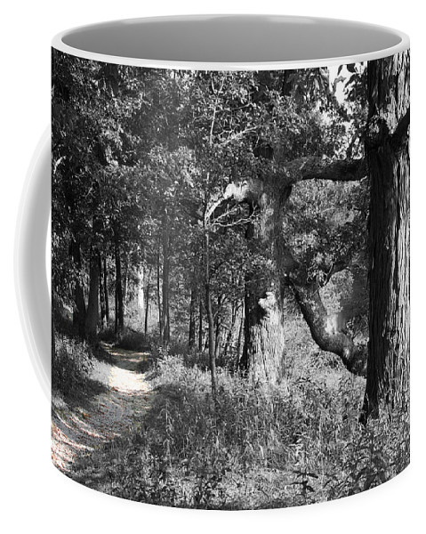 Nature Coffee Mug featuring the photograph Parkland Trail by Dylan Punke