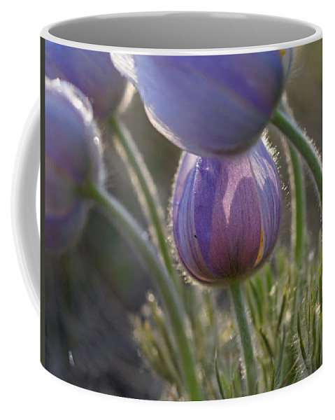 Pasque Coffee Mug featuring the photograph Pasque Shadows by Heather Coen