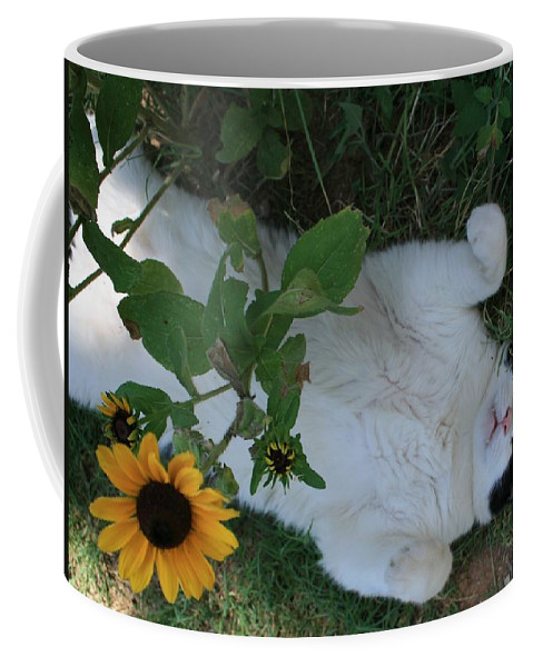 Daisies Coffee Mug featuring the photograph Passed Out Under The Daisies by Marna Edwards Flavell