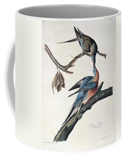 Passenger Pigeon Coffee Mug featuring the drawing Passenger Pigeon by John James Audubon