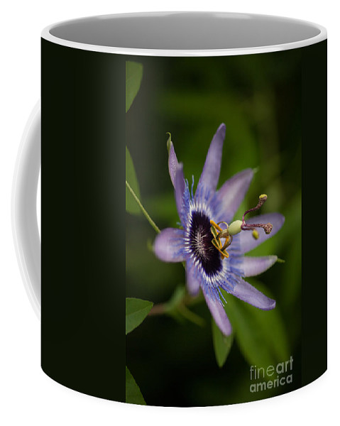 Passion Flower Coffee Mug featuring the photograph Passiflora by Mike Reid
