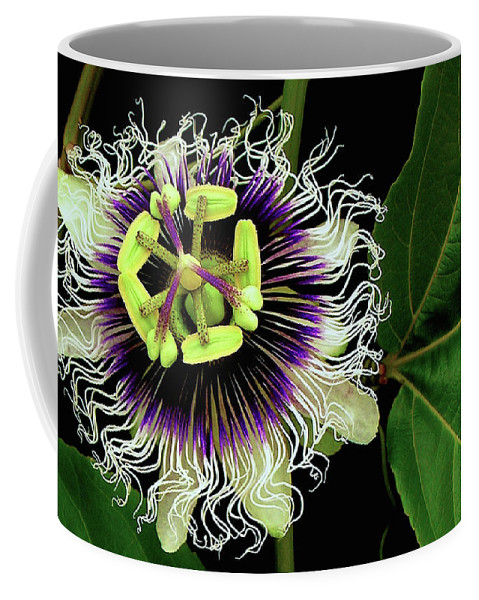 Hawaii Iphone Cases Coffee Mug featuring the photograph Passion Flower by James Temple