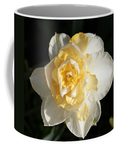 Flower Coffee Mug featuring the photograph Pastel by Jean Haynes