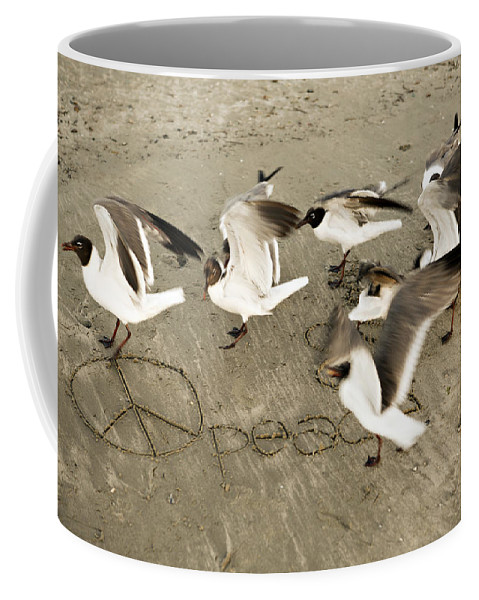 Bird Coffee Mug featuring the photograph Peace Dance by Marilyn Hunt