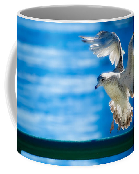 Animal Coffee Mug featuring the photograph Peace Gull by Rich Leighton