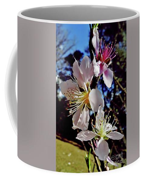 Peach Blossom Coffee Mug featuring the photograph Peach Blossoms by D Hackett