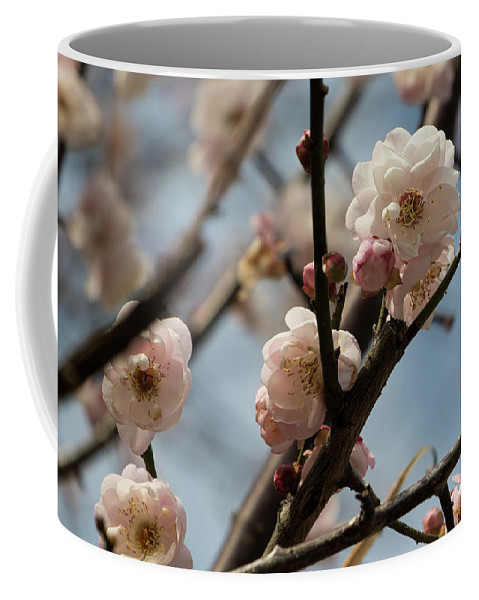Flower Coffee Mug featuring the photograph Peach Blossoms In Spring by Lauren Bucke