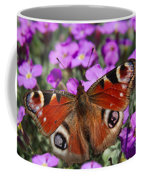 Aglais Coffee Mug featuring the photograph Peacock Butterfly by MSVRVisual Rawshutterbug