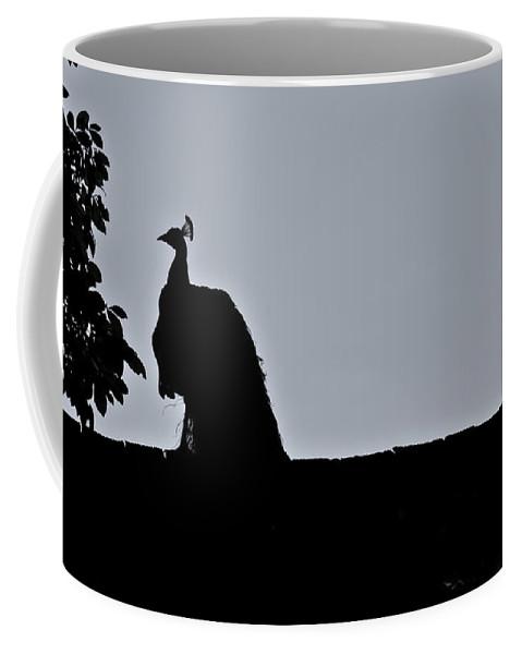 Peacock Coffee Mug featuring the photograph Peacock At Night by Douglas Barnett