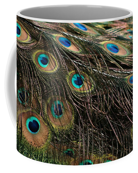 Peacock Coffee Mug featuring the photograph Peacock Feathers by Tina Meador