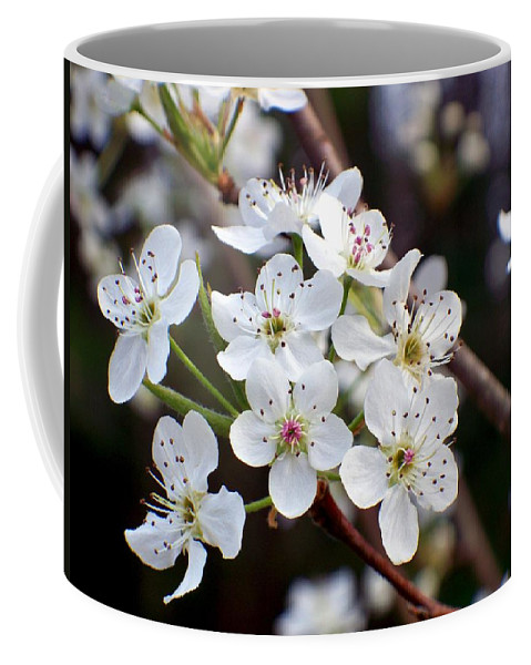 Pear Coffee Mug featuring the photograph Pear Tree Blossoms II by Betty Northcutt