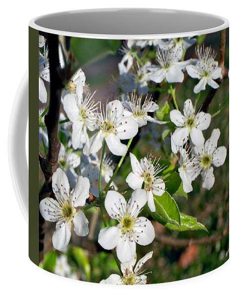 Pear Coffee Mug featuring the photograph Pear Tree Blossoms Iv by Betty Northcutt