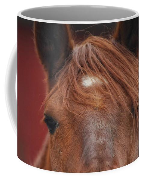 Horse Coffee Mug featuring the photograph Peek A Boo by Donna Blackhall