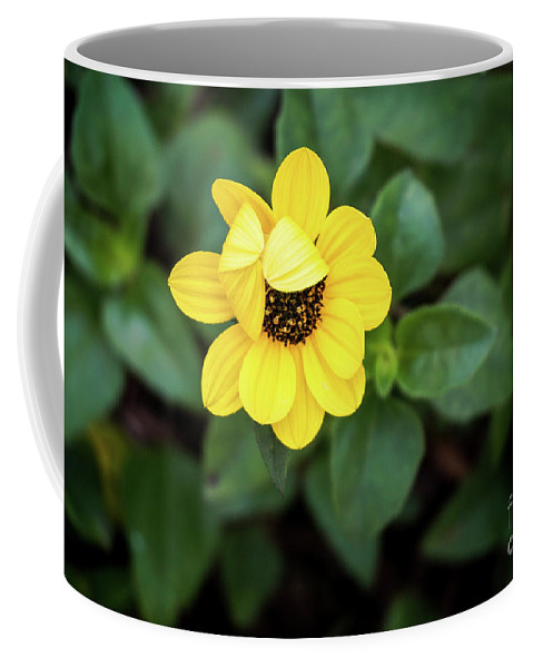 Flower Coffee Mug featuring the photograph Peek A Boo Flower by L Bee