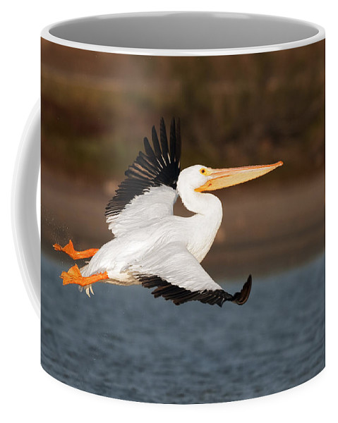 Pelican Coffee Mug featuring the photograph Pelican Lift Off by Gary Langley