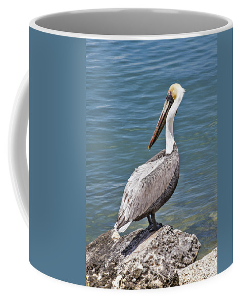 Water Coffee Mug featuring the photograph Pelican On Rock by Bob Slitzan