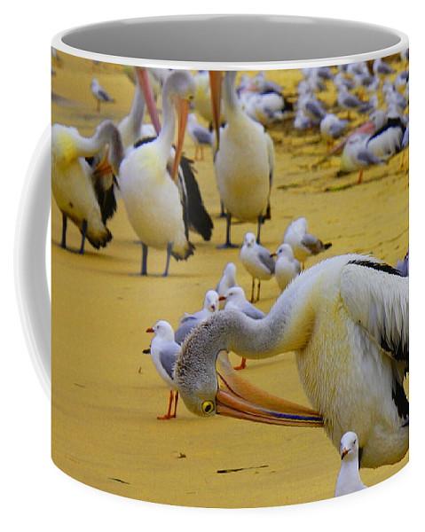 Australia Coffee Mug featuring the photograph Pelicans At Pearl Beach 3.1 by Giro Tavitian