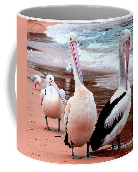 Pelecanidae Coffee Mug featuring the photograph Pelicans At Pearl Beach 5.2 by Giro Tavitian