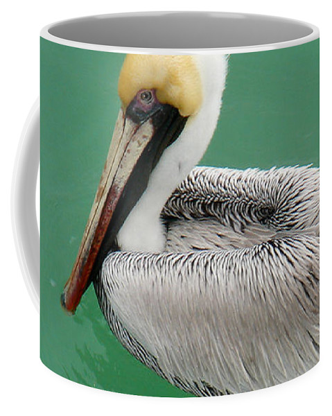 Florida Coffee Mug featuring the photograph Pelican's Cove by Chris Andruskiewicz